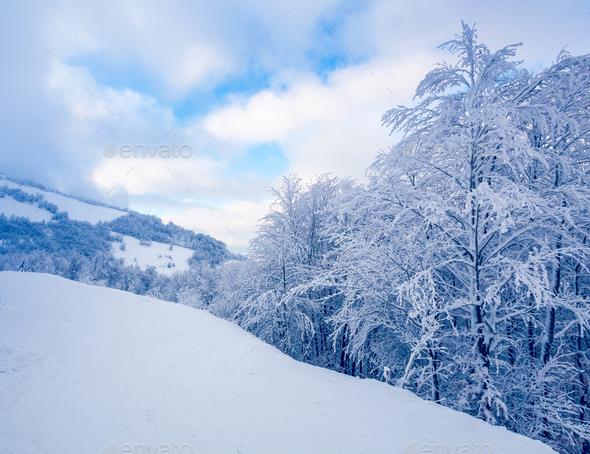 Beautiful winter landscape - Stock Photo - Images