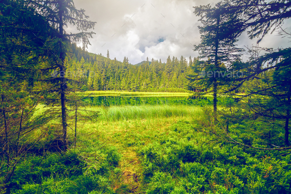 Summer mountain lake forrest - Stock Photo - Images