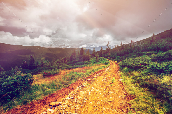 Mountain path in Carpathians, Ukraine. - Stock Photo - Images