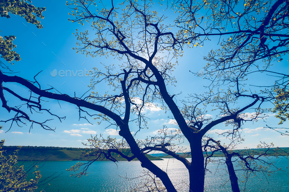 tree with water in sunshine - Stock Photo - Images