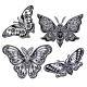 Collection of Butterflies or Moths