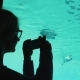 A Visitor To the Zoo Takes Pictures of the Underwater Inhabitants Through the Transparent Wall - VideoHive Item for Sale