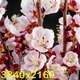 White Flowers Blossoms on the Branches Cherry Tree - VideoHive Item for Sale