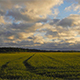 Farmland With Rye, Secale Cereal During Sunrise - VideoHive Item for Sale