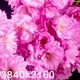 Pink Sakura Tree Flowers - VideoHive Item for Sale