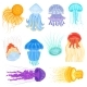 Jellyfish Vectors - GraphicRiver Item for Sale