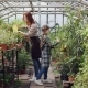 Young Entrepreneur Greenhouse Owner Is Watering Plants in Her Hothouse While Her Cute Little Child - VideoHive Item for Sale