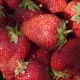 Bright Strawberry Rotates on a Sunny Day - VideoHive Item for Sale