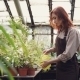 Attractive Young Woman in Apron Holding Watering-pot and Watering Green Plants in Glasshouse - VideoHive Item for Sale