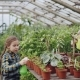 Little Girl Is Spraying Green Pot Plants Using Spray Bottle While Her Mom Is Watering Flowers - VideoHive Item for Sale