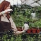 Smiling Greenhouse Worker and Her Adorable Daughter Are Talking, Taking Pots with Plantlets From - VideoHive Item for Sale