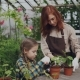 Young Florist and Her Child Are Hoing Soil in Pot with Green Plants Using Gardening Tools  - VideoHive Item for Sale