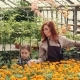 Mother and Daughter Are Choosing Flowers in Greenhouse and Putting Them in Plastic Container - VideoHive Item for Sale