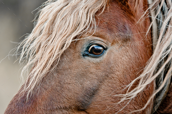 beautiful horse - Stock Photo - Images