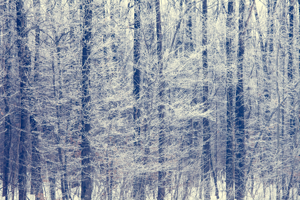 Winter trees background - Stock Photo - Images