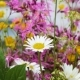 Daisies and Flowers - VideoHive Item for Sale