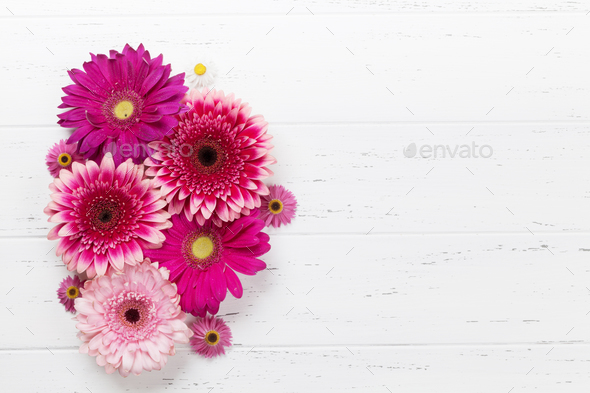 Gerbera flowers - Stock Photo - Images