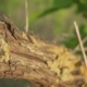 Old Vine and Young Green Leaves of Grapes - VideoHive Item for Sale