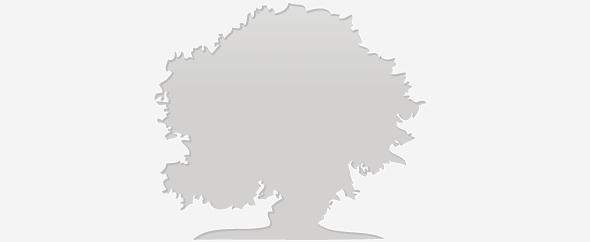 Envato olivenbaum profile