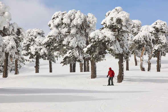Skiing on a beautiful snow forest landscape. Winter sport. Horizontal - Stock Photo - Images