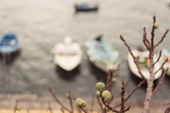 Berth with boats on sea shore - Stock Photo - Images