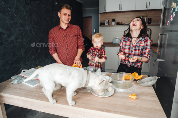 Dog on the kitchen table. Happy family in the kitchen - Stock Photo - Images
