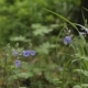 Flowers in Summer Forest - VideoHive Item for Sale