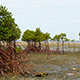 Mangrove Trees On the Sand Islan Nogas in the Philippines During Low Tide - VideoHive Item for Sale
