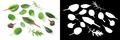 Microgreens baby greens, paths, top view