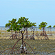 Mangrove Trees on the Sand Island Nogas in the Philippines During Low Tide - VideoHive Item for Sale