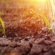 Water Strips Water the Young Shoots on the Field In the Rays of the Setting Sun - VideoHive Item for Sale