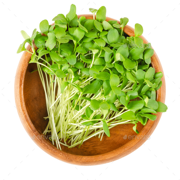 Flax microgreens in wooden bowl over white - Stock Photo - Images