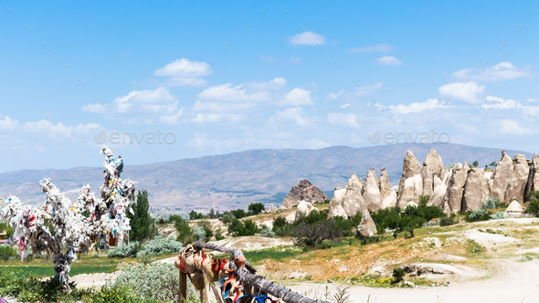 ornamental tree and cave churches near Goreme - Stock Photo - Images