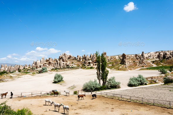horse paddock near ancient settlement near Goreme - Stock Photo - Images