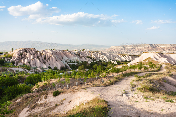 little orchard near Uchisar village in Cappadocia - Stock Photo - Images