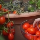 Hand of a Young Woman Picking Ripe Red Tomatoes by Flowerbed in Garden - VideoHive Item for Sale