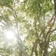 Sunlight Streaming Through Leaves - VideoHive Item for Sale