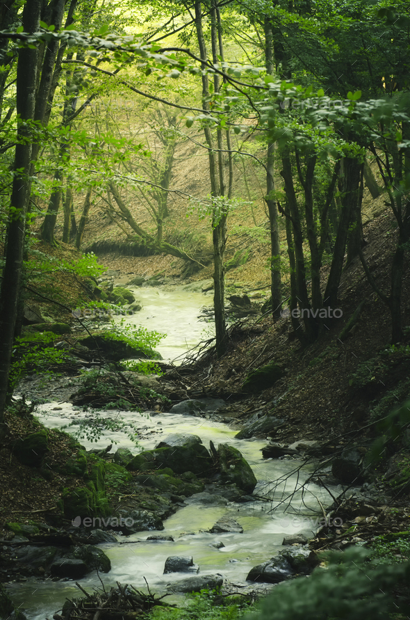 Mountain river flowing through the green forest - Stock Photo - Images