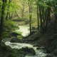 Mountain river flowing through the green forest - PhotoDune Item for Sale