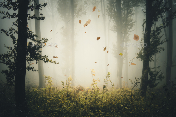 Leaves falling in mysterious autumn forest with fog - Stock Photo - Images