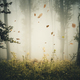 Leaves falling in mysterious autumn forest with fog - PhotoDune Item for Sale