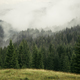 Mountain pine tree forest landscape with fog rising - PhotoDune Item for Sale