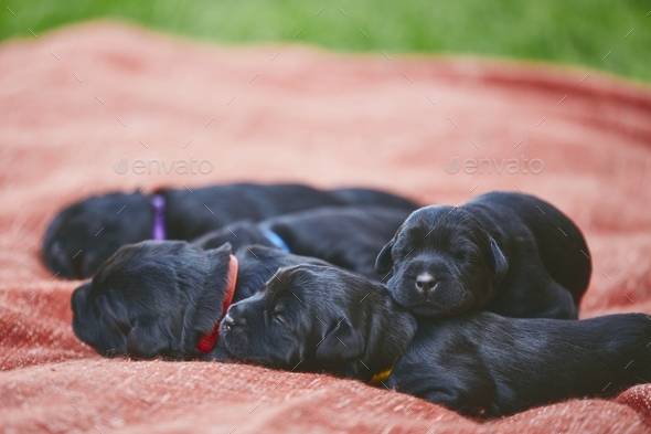 Newborns of dog - Stock Photo - Images