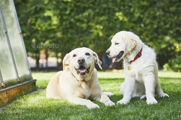 Two playful dogs on garden - Stock Photo - Images