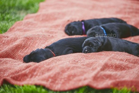 Newborns of dog - Stock Photo - Images