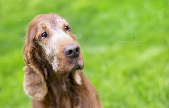 Beautiful old dog portrait - Stock Photo - Images