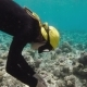 Pretty Free Diver Exploring Coral Reef - VideoHive Item for Sale