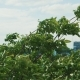 Trees In Strong Wind - VideoHive Item for Sale