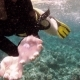Snorkeler Exploring Coral Reef in Tropical Sea - VideoHive Item for Sale