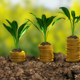 Growing Money - Plant On Coins - Finance And Investment Concept - VideoHive Item for Sale
